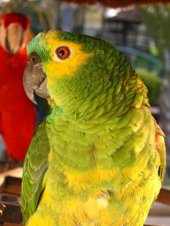 thumbnail_parrot-2068953_960_720