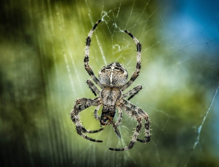 thumbnail_spider-1646340_960_720