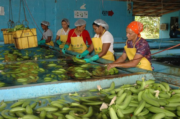 Banano-dominicano