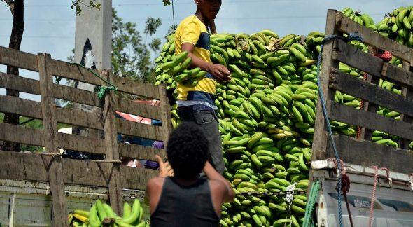 plátanos-dominicanos-1000x550