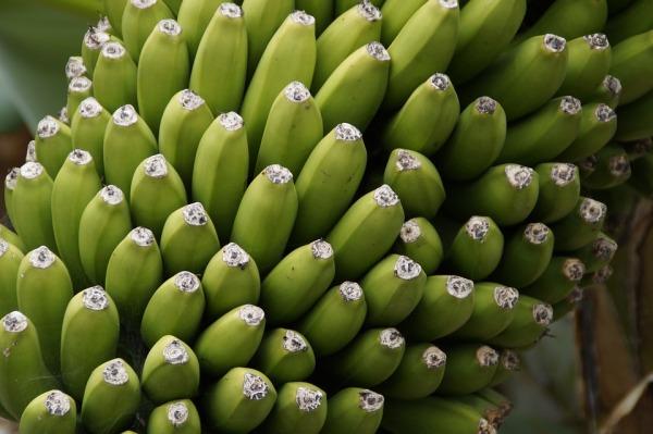 bananas-2471742_960_720
